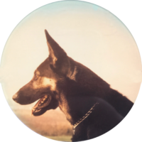 Police Canine   Caesar I | Star #DNA