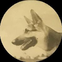 Police Canine   King I | Star #DNA