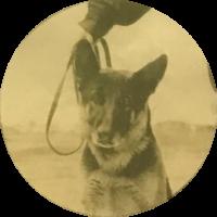 Police Canine   Kirk I | Star #DNA